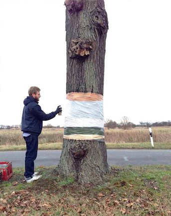 siering_shuster_tree