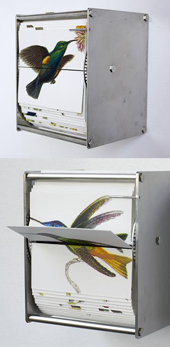 juan_fontanive_ornithology